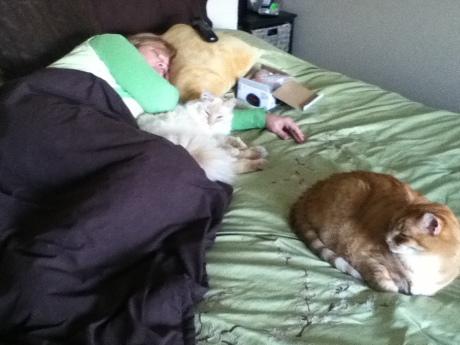 mom-cats